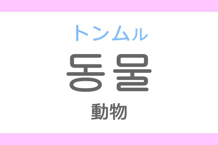 동물(トンムル)の意味「動物(どうぶつ)」ハングル読み方・発音