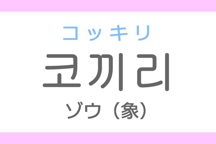 코끼리(コッキリ)の意味「ゾウ(象)」ハングル読み方・発音