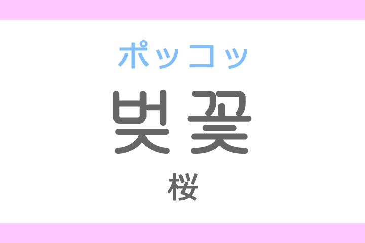 벚꽃(ポッコッ)の意味「桜(さくら)、桜の花」ハングル読み方・発音